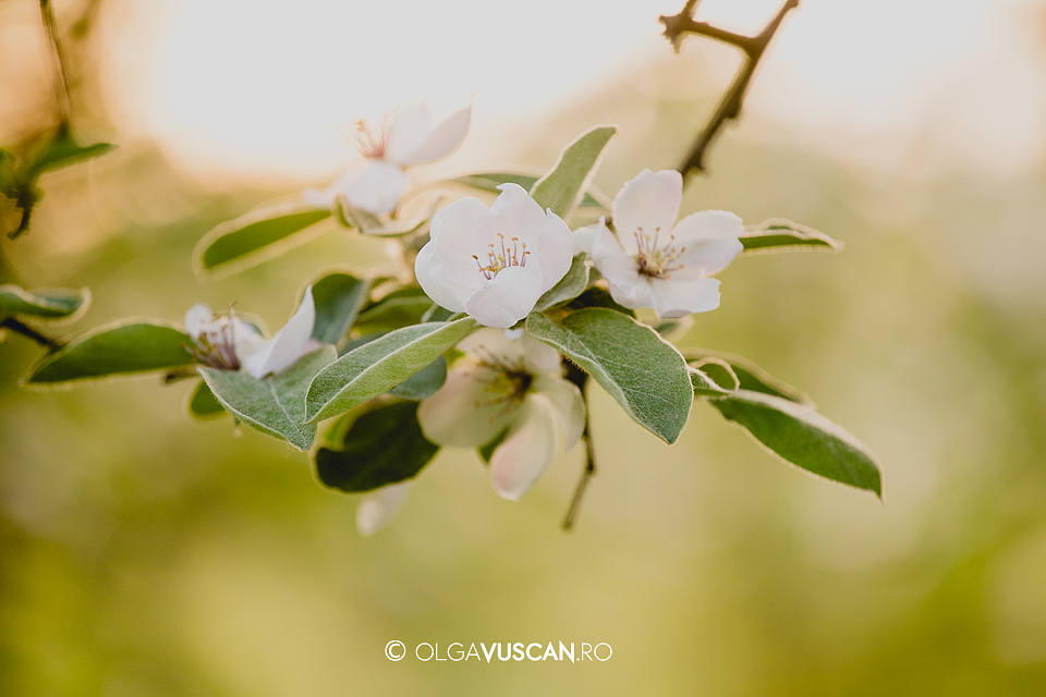 sesiune foto copii afara _fotograf copii Olga Vuscan